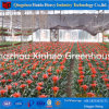 UV Treated Flower Greenhouse, Farm Greenhouse for Commercial Use
