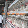 Solid Environmental Cheap Hotsale Automatic Poultry Farm Layer Chicken Cages