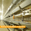 Battery Design Automatic Poultry Equipment for Pullet