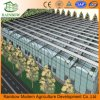 Multi Span Greece Material Plastic Film Horticultural Greenhouses with Factory Price