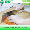 Clear Food Processing Disposable Glove