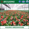 Professional Vegetables Green House PC Sheet/Board Hydroponic Agriculture Greenhouse for Commerical Use