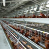 Automtic Chicken Cages for Layer Farm