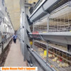 Broiler Pan Feeding Cage Equipment with Automatic Birds Harvest System