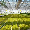 China Hot Sale PC Used Commercial Angriculture Greenhouse with Hydroponics