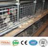Automatic Chicken Poultry Cage for Pullet and Small Chicken (H Type Frame)