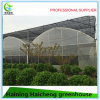 Multi Span Hydroponic Film Green House for Strawberry