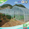 Single-Span Tunnel Greenhouse for Agricultural Flowers and Vegetables Cultivation