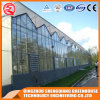 Multi-Span Steel Frame/ Aluminum Profile Polycarbonate Sheet Greenhouse for Flower