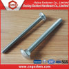 Carbon Steel Zinc Plated Carriage Bolt DIN603