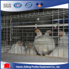 Chicken Broiler Battery Cage