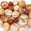 Great Taste Japanese Style Roasted Peanuts Healthy Snacks for Kids Colorfu Snacks