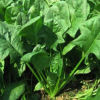 Organic Spinach Juice Powder Manufacturer Supply