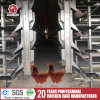 H Type Chicken Automatic Cage Poultry Equipmet Bird