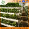 Hydroponics System for Agricultural Greenhouse