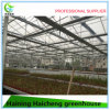 Glass Garden Greenhouse for Flower