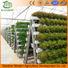Most Popular High Quality Hydroponics Factory for Vegetable Growing