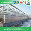 Hydroponics Greenhouse Film/PC Sheet Greenhouse Commercial for Agriculture