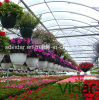 Special Film for Flowers Greenhouse
