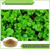 Coriandrum Sativum Extract 10: 1, Powder