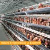 high technology A type battery chicken layer cage for farm