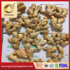 Best Sale New Crop Fresh Ginger Exporting Quality