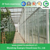 Agriculture Steel Structure Polycarbonate Sheet Greenhouse for Fruit