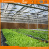 Multi-Span Venlo Type Glass Greenhouse for Planting Fruits&Vegetables
