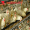 Automatic a Type Layer Chicken Cage Design for Nigeria Farms