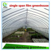 Single-Span Agricultural Greenhouses Type and Large Size Plastic Tunnel Greenhouse