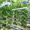 Glass Greenhouse with High Technology Environment Control System for Nft Hydroponic System and Strawberry/Tomato/Vegetables/Cucumber Soilless Culture System