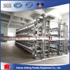 Automatic Chicken Cage From Jinfeng H Type and a Type Chicken Cages