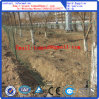 PVC Euro Fence/Cheaper Fence/Field Fence