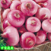 2017 Fresh Red Onion From China