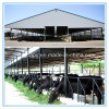 Modern Modular Prefabricated House for Cows