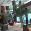 Artificial Ficus Tree for Restaurant