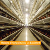 Automatic Laying Chicken Cage of Poultry Equipment