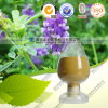 Natural High Quality Rosemary Extract Rosmarinic Acid