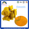 Curcuma Longa Extract Powder