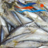 General Size Frozen Pacific Mackerel (PM013)
