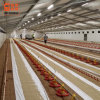 Poultry Farming LED Light System LED Lamp and Tube