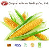 IQF Sweet Corn COB with Good Price