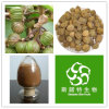 100% Pure Natural Villous Amomum Fruit Extract