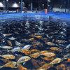 Zlrc FRP GRP Fish Farm Water Tank Fiberglass Fish Tank