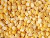 IQF Sweet Corns, IQF Sweetcorns, Kernels/COB, Frozen Sweetcorn, Frozen Sweet Corns, Kernels/COB, IQF Super-Sweet Corn Kernels, No GMO