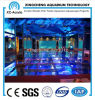Transparent PMMA Sheet Aquarium of Aquarium Project