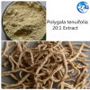 Analgesic Polygalic Acid Polygala Tenuifolia 20: 1 Extract Powder