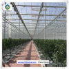 Commercial PC Sheet Hydroponic Greenhouse for Cucumber