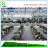 Hydroponic Glass Green House for Tomato Planting