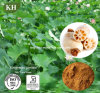Lotus Root Extract 10: 1 Antioxidant